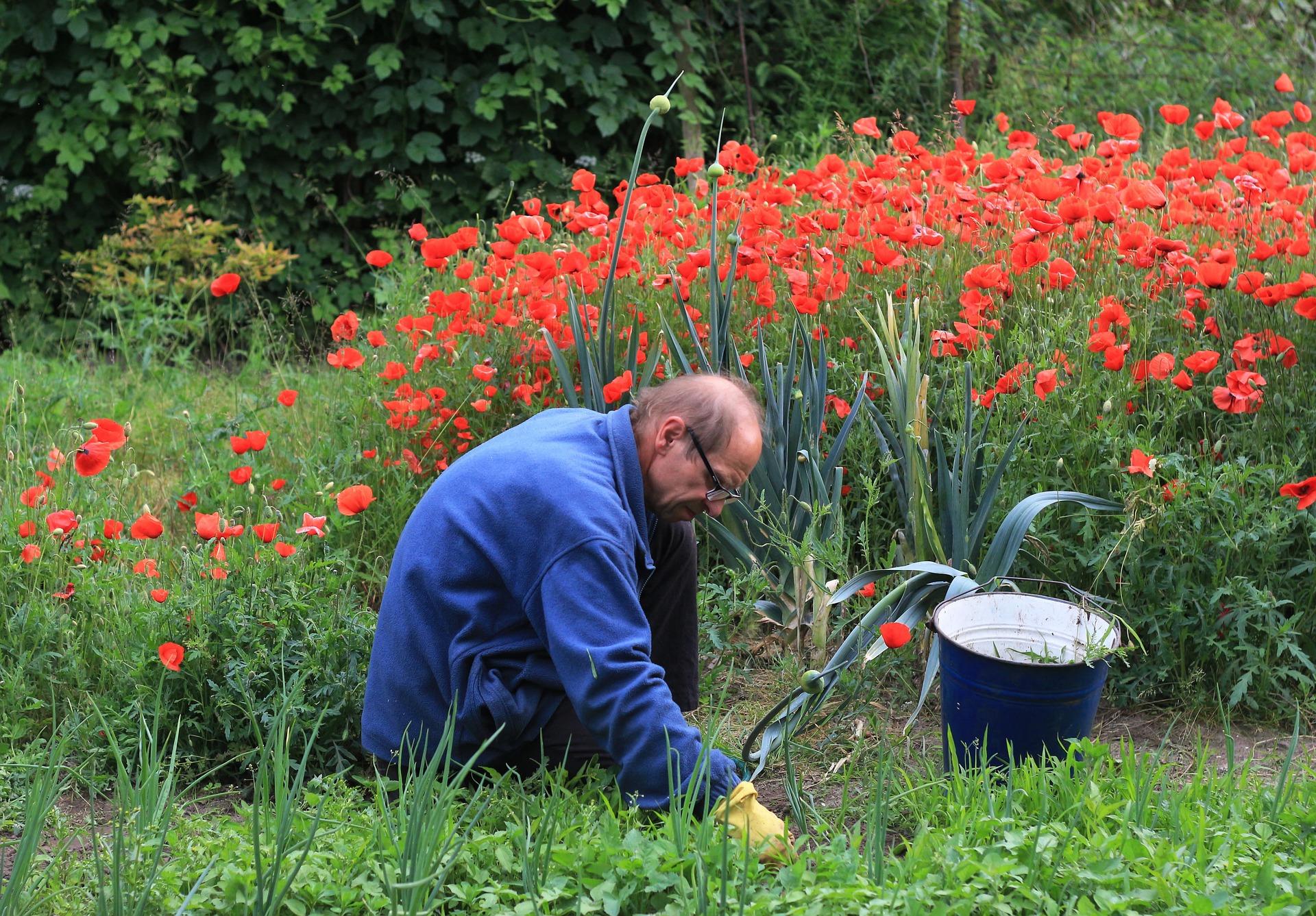 Zahrada originálně – zahrada jinak- Vyzkoušejte hit letošního roku!