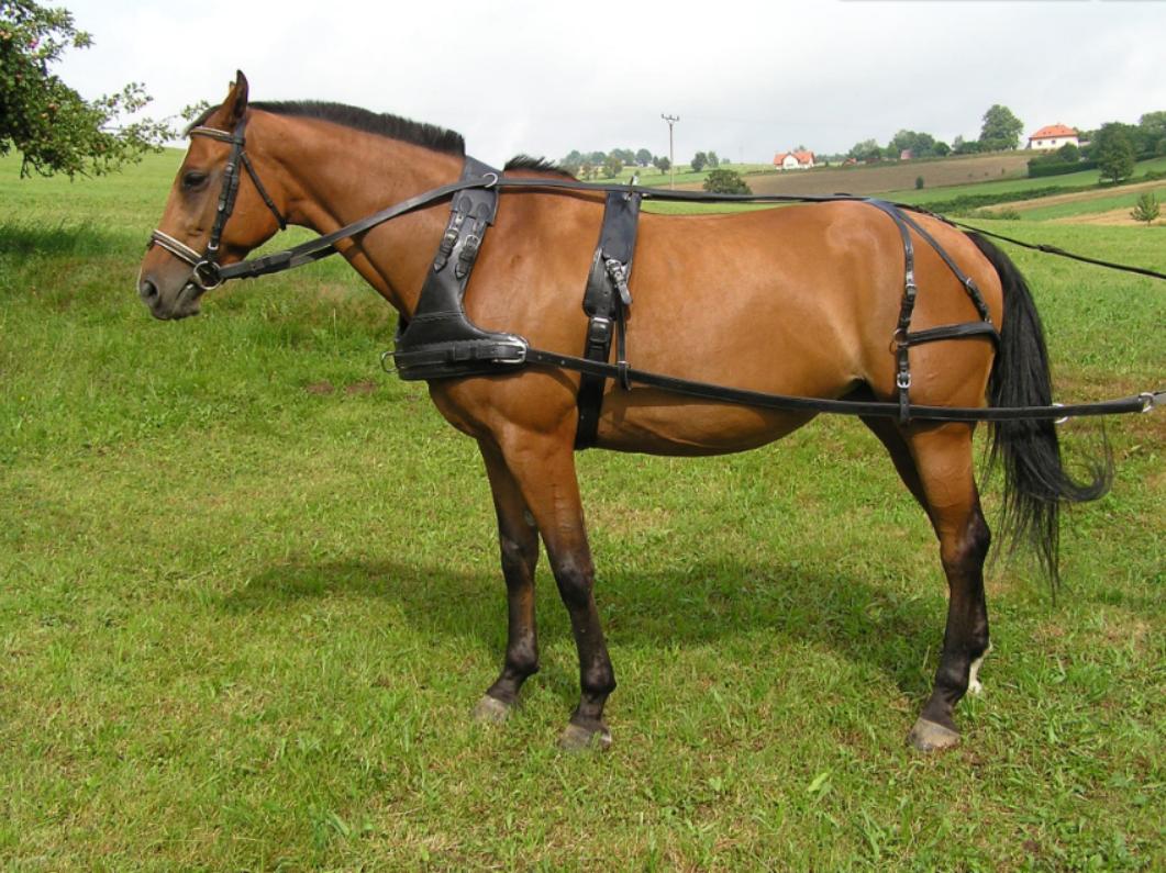 Kůň jako nejlepší přítel člověka