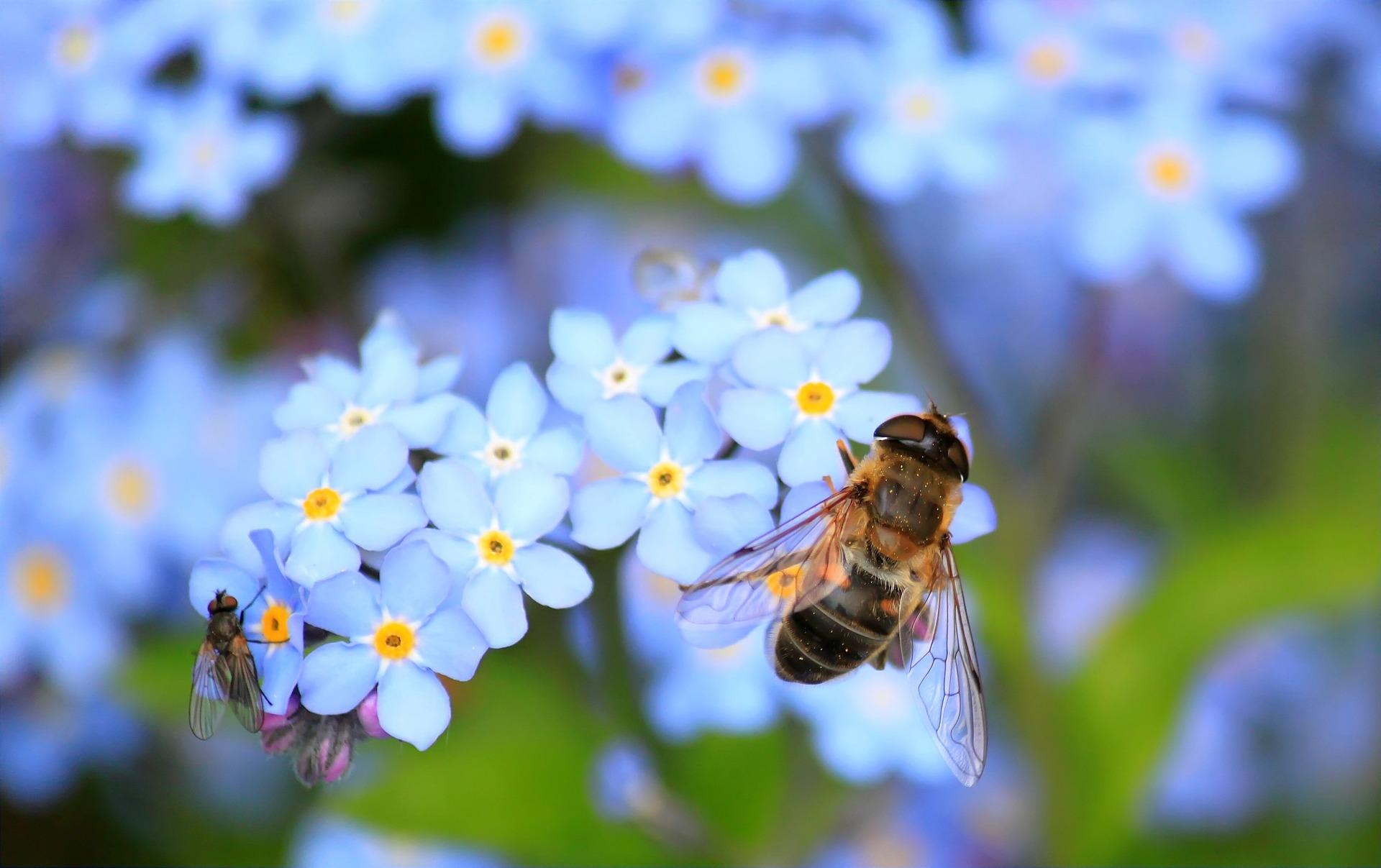 Pilný jako včelka, sladký jako med