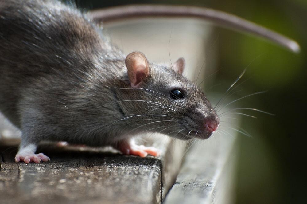 Život bez potkanů, mravenců a švábů