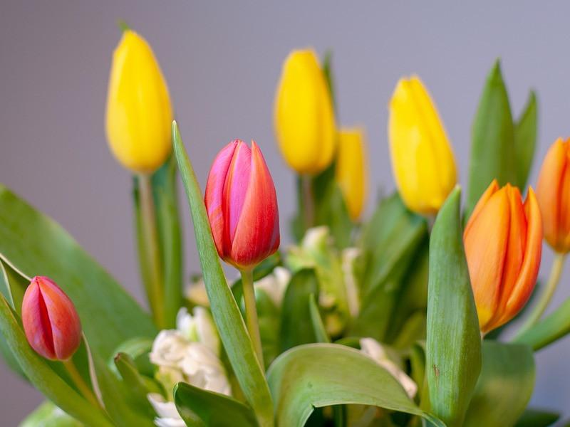 Květiny jako dárek i výzdoba