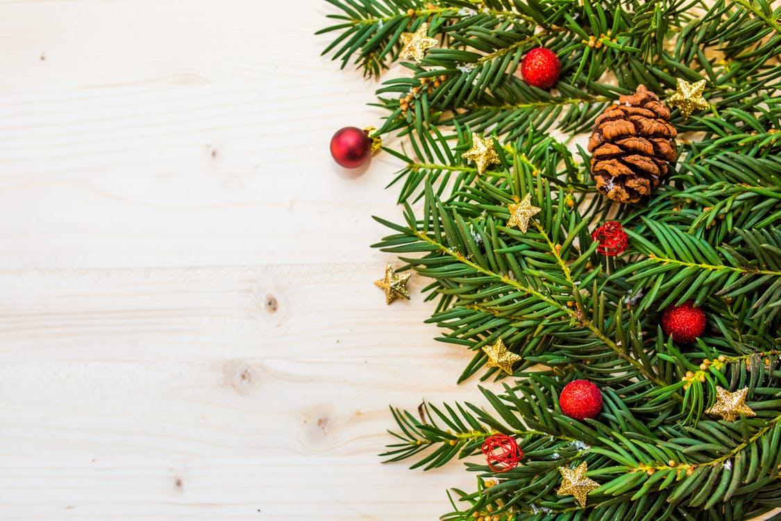 I živý stromek může Vánoce přežít ve zdraví