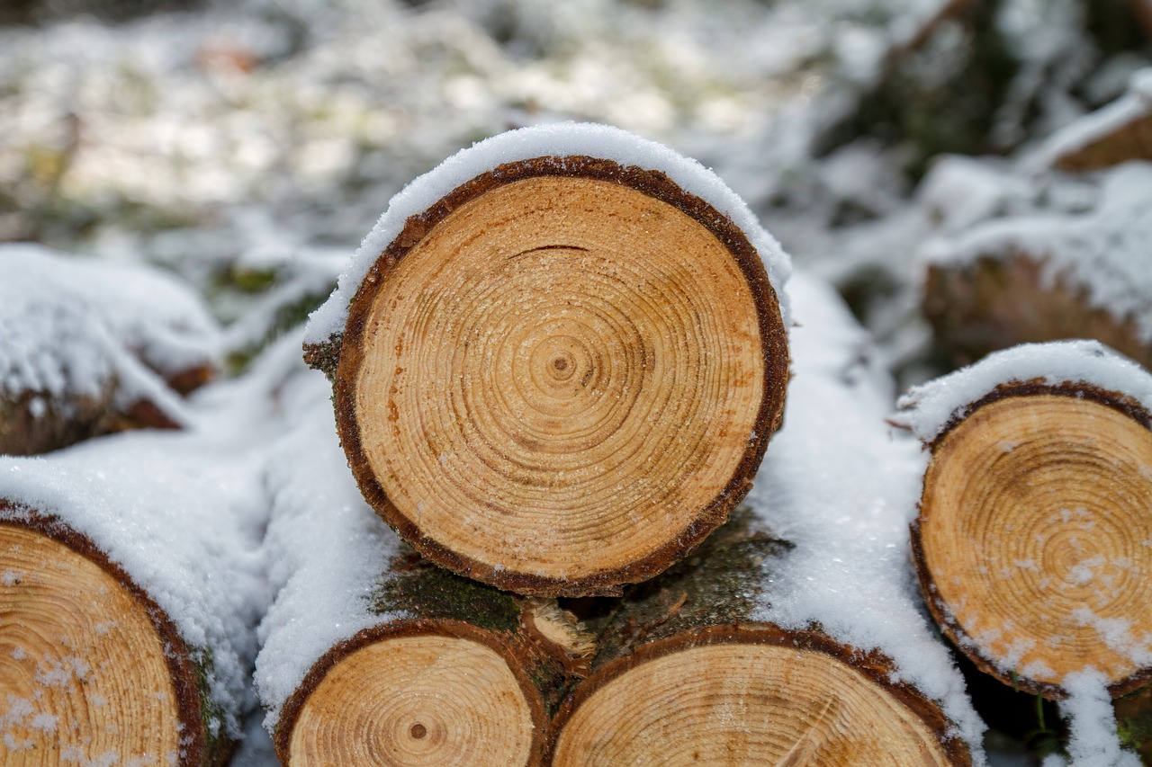 Dřevo jako základ moderních staveb