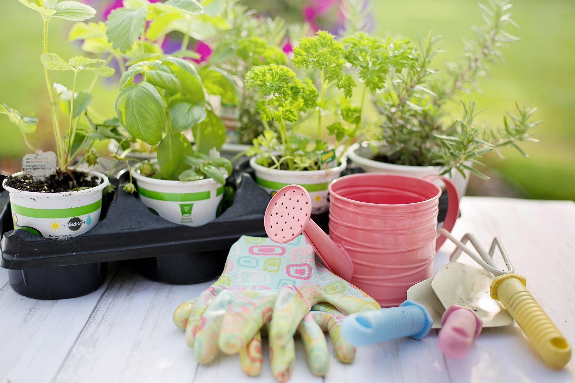 Starejte se o zahradu, ona vám to vrátí
