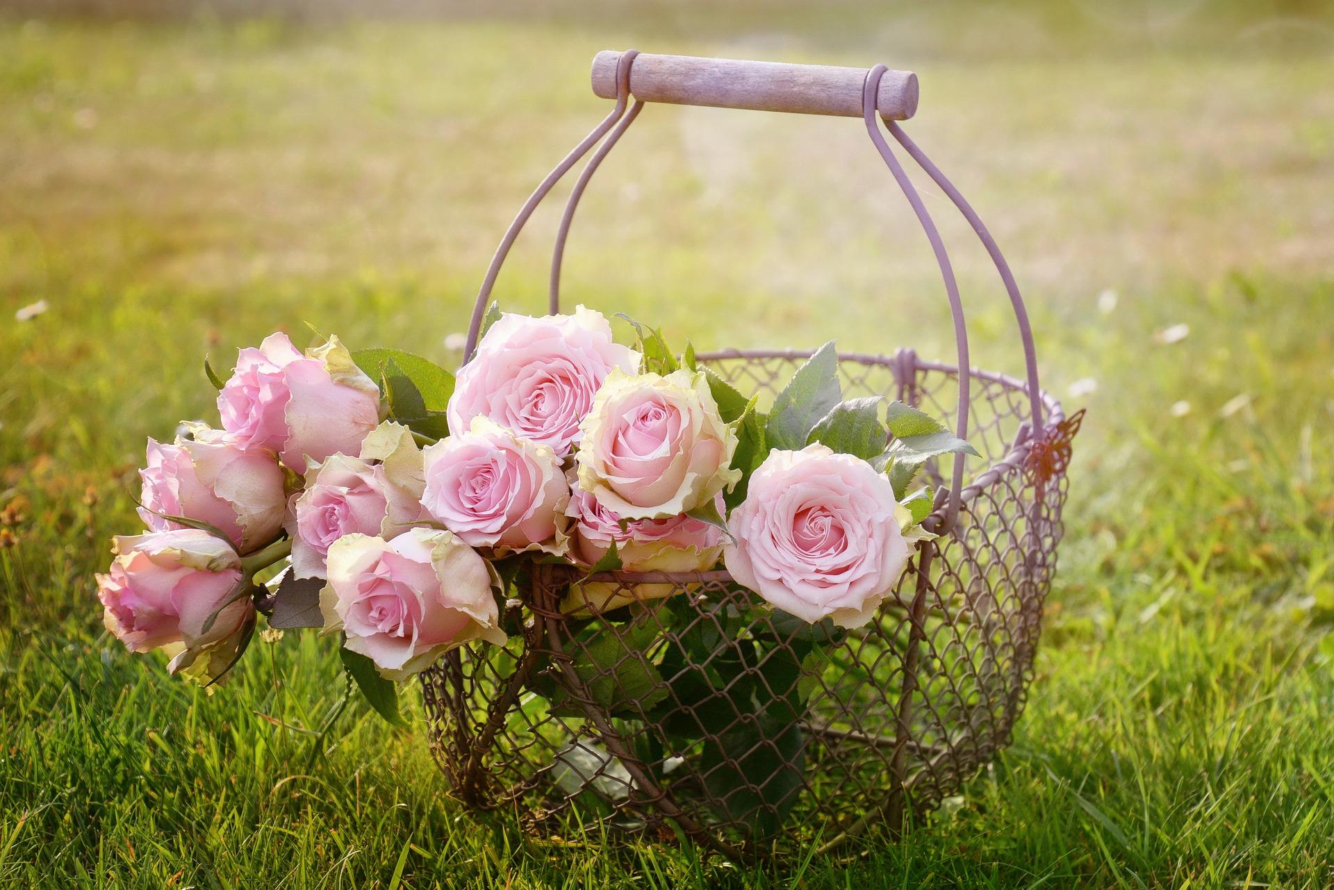 Květiny ozdobí každý interiér