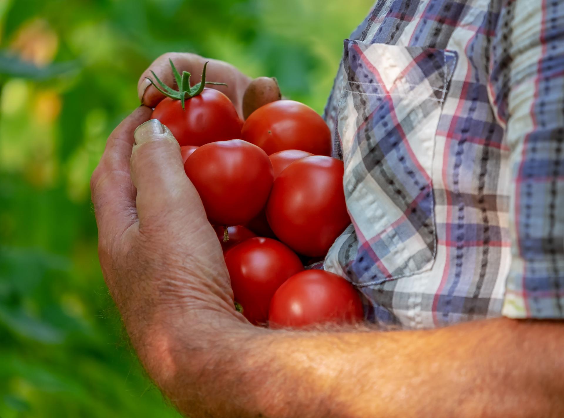 Zelenina jako prevence chorob