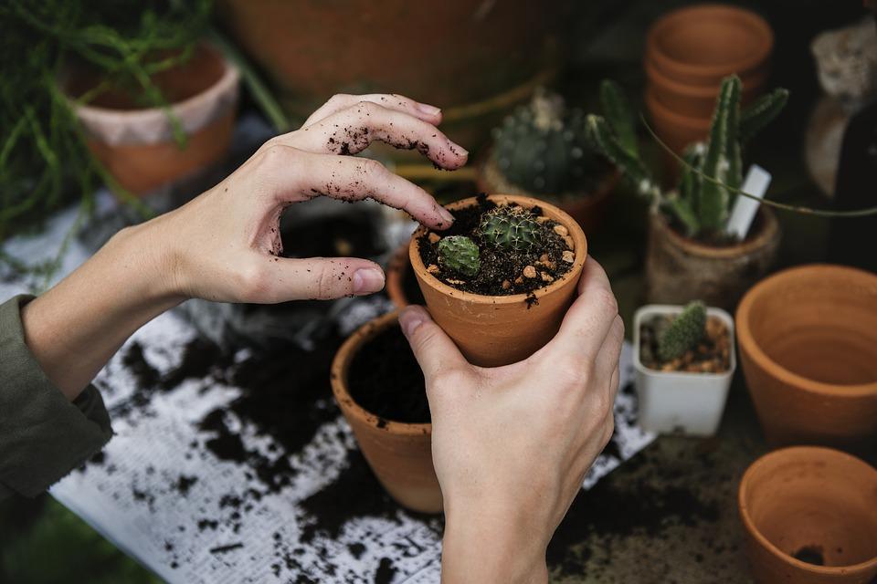 Do zahradnictví za nákupy a odpočinkem