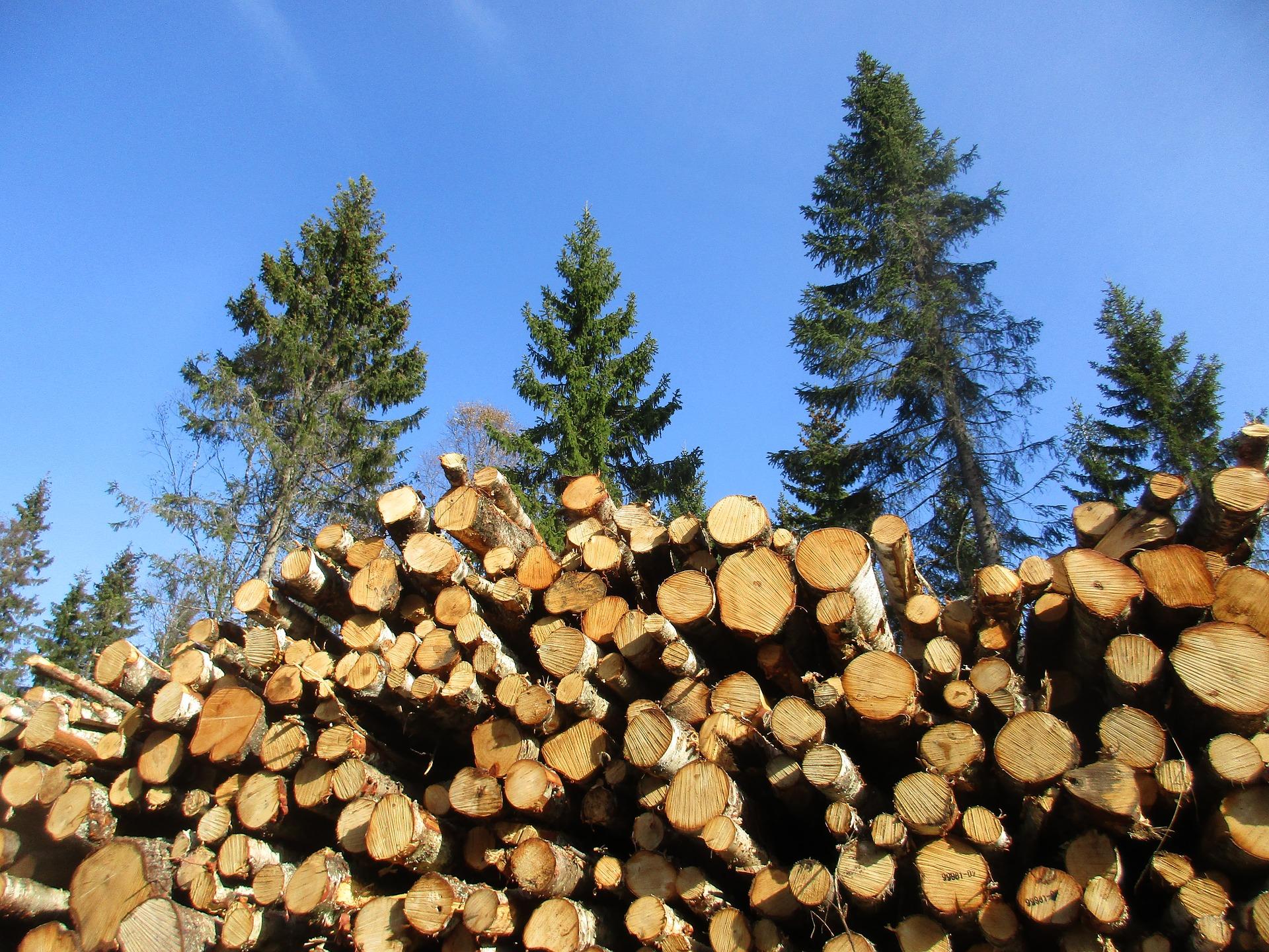 Vlastnosti dřevostaveb, které vás překvapí.