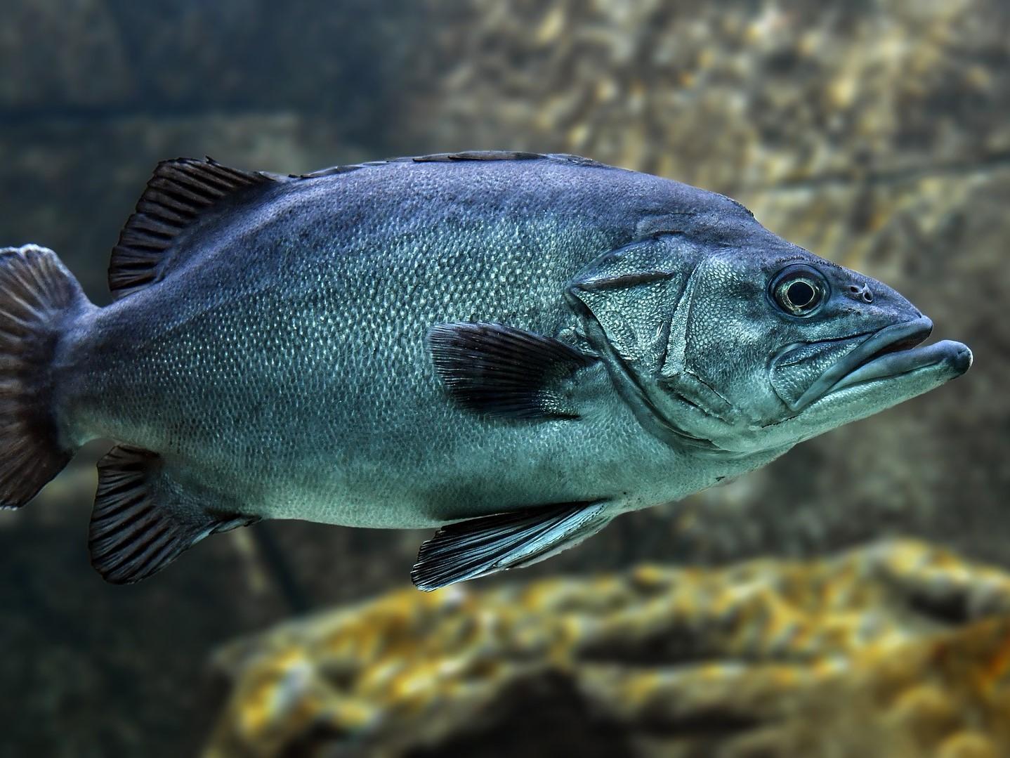 Prodej živých ryb po celý rok