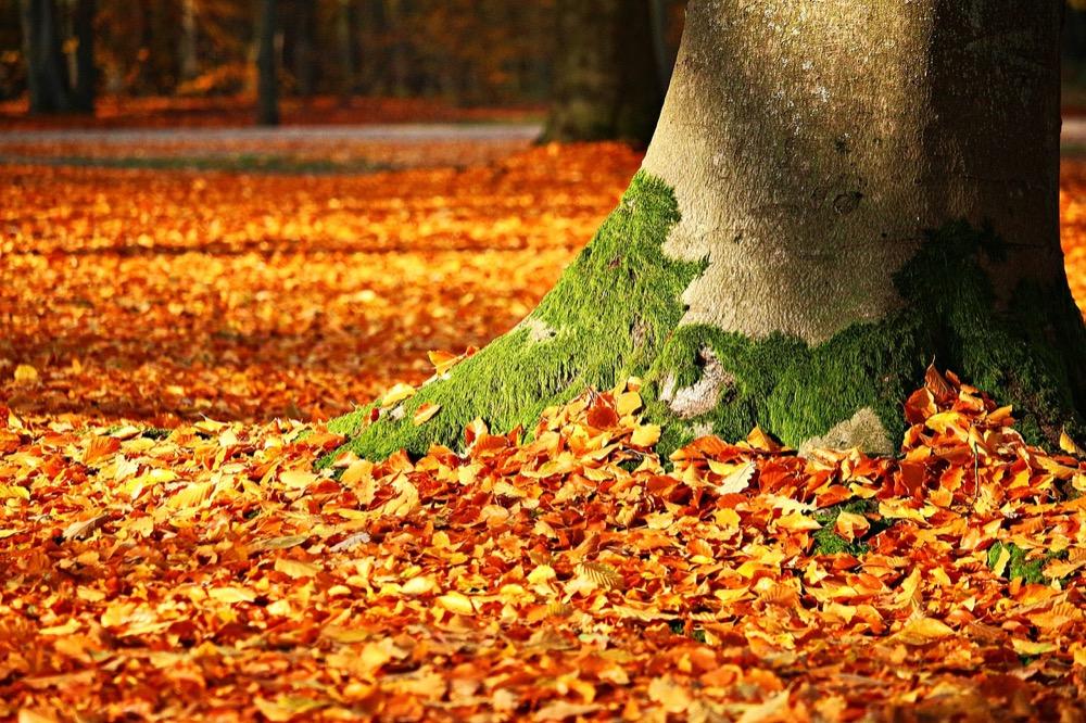 Proč jsou lesy tak důležité? Mohou zabránit například povodním