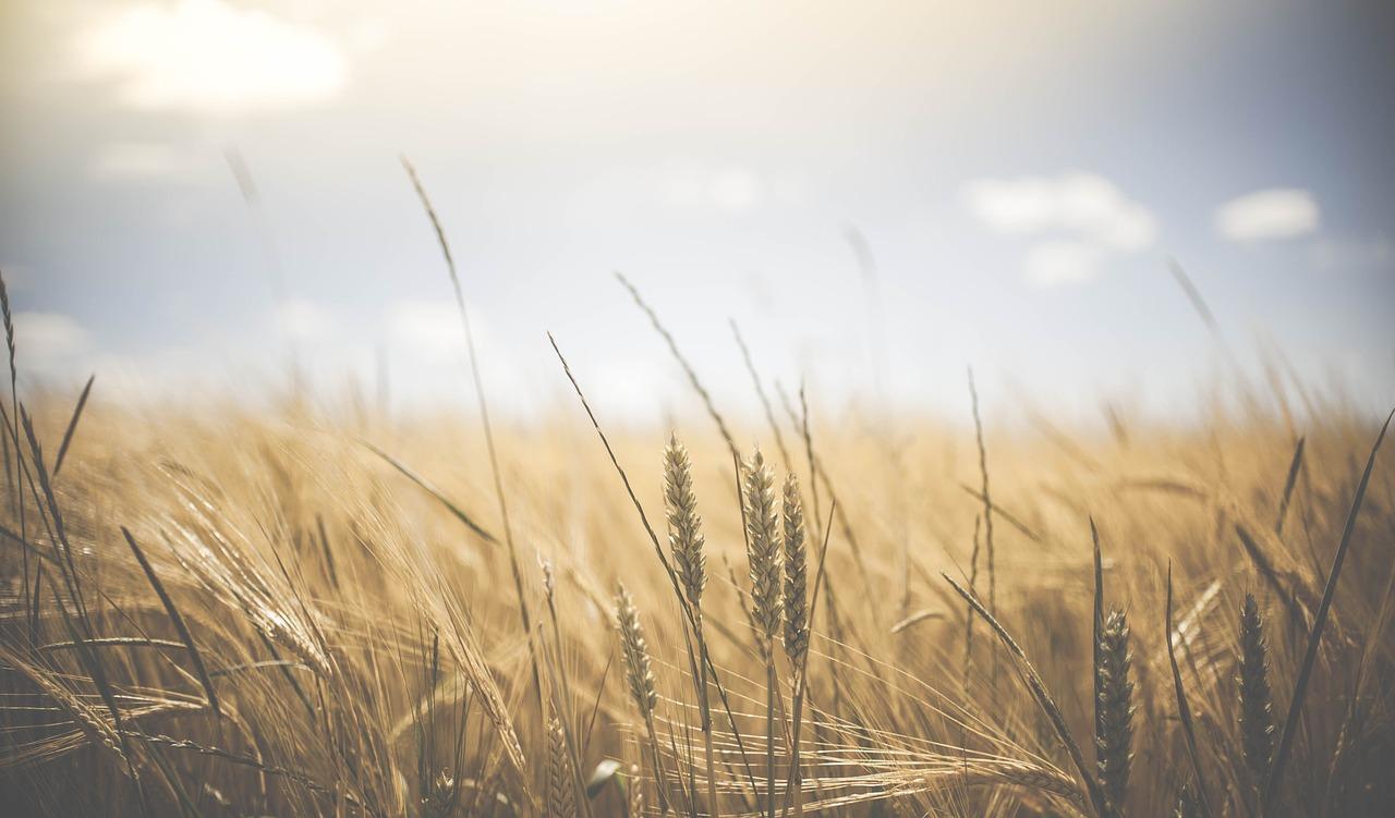 Proč zemědělství ve vyspělých zemích stále více upadá?