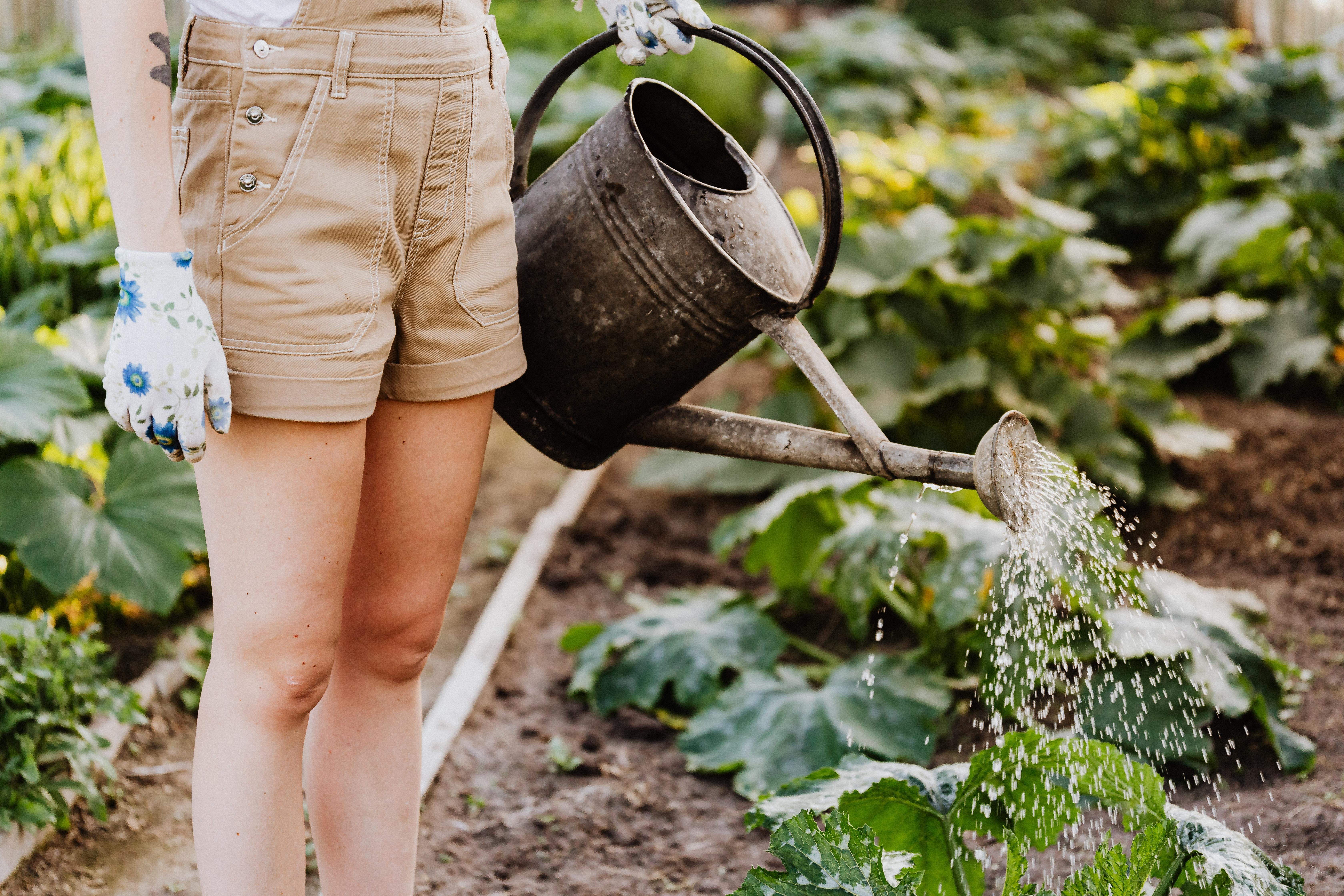 Co vaše zahrada potřebuje v létě